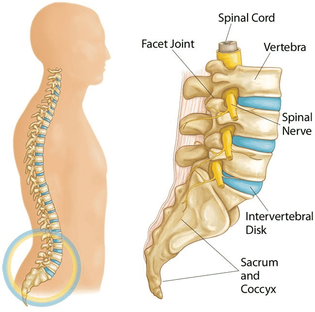 Best Spondylolisthesis Treatment Hospital in Hyderabad. Spine Surgery Cost in India - Consult our Spine Doctor Now